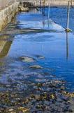 Отражения воды - понтон Стоковые Изображения RF