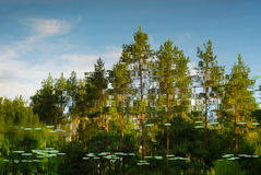 Отражения в воде с деревьями на заднем плане Стоковые Фото