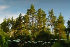 Отражения в воде с деревьями на заднем плане Стоковые Фотографии RF