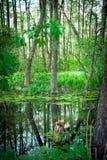 Отражения в реке Стоковое Изображение RF