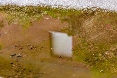 Отражения в лужице Стоковые Фотографии RF