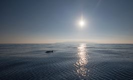 Отражения дельфина и солнечного света с побережья Калифорния около Oxnard Калифорния США стоковая фотография