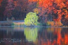 Отражения дерева в озере Стоковое Изображение