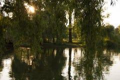 Отражения дерева на озере на заходе солнца Стоковая Фотография RF