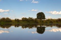Отражения дерева на озере Стоковые Фото