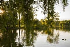 Отражения дерева на озере Стоковое Изображение