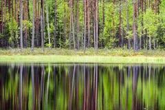отражения деревьев в озере мочат в ярком солнце полдня Стоковое Фото