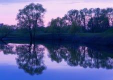 Отражения деревьев захода солнца Стоковые Фото