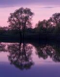 Отражения деревьев пруда захода солнца Стоковые Изображения