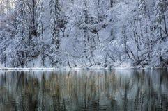Отражения зимы Стоковая Фотография