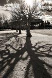 Отражения и тени дерева Стоковое Фото