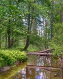 Отражения, маленькое река кедра, Gladwin, MI Стоковое фото RF