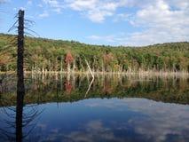 Отражения на воде стоковое фото rf