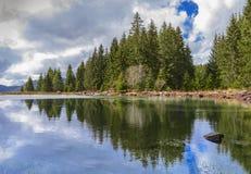 Отражения на Coniferous лесе в озере Стоковое Изображение
