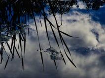 Отражения неба и облака в пруде стоковое изображение rf