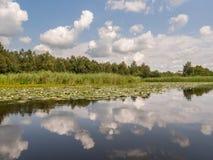 Отражения облака в реке с лилиями Стоковые Фото