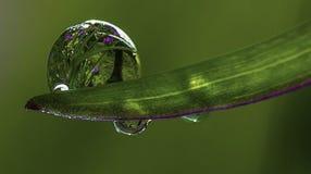 Отражения дождя Стоковое Изображение RF