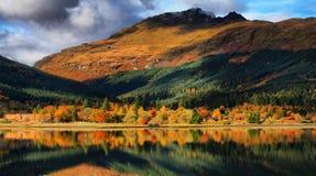 отражения осеней золотистые Стоковое Фото