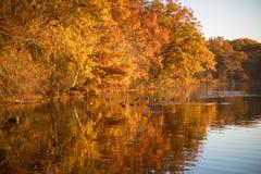 Отражения осени листвы в озере Стоковая Фотография