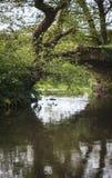 Отражения под сельским мостом Стоковая Фотография RF