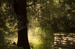 отражения пруда Стоковое Изображение
