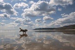 Отражения пляжа с собакой. стоковая фотография