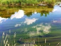 Отражения реки Стоковая Фотография
