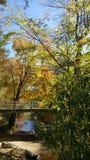 Отражения цвета падения в воде Стоковые Изображения