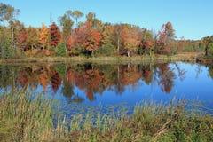 Отражения цвета падения Стоковое Фото