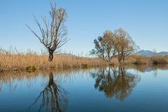отраженная вода Стоковое Изображение
