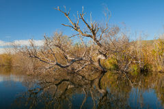 отраженная вода Стоковое Фото