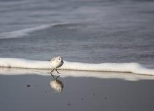 отраженная птица Стоковые Изображения