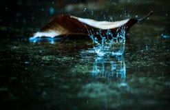 Отраженное падение дождя Стоковые Изображения