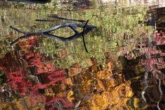 Отраженные листья падения Стоковое Изображение RF