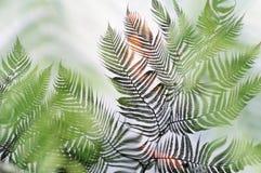 отраженные листья Стоковые Изображения