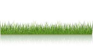 отраженный зеленый цвет травы Стоковая Фотография RF