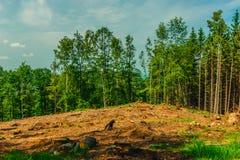 Отрежьте вне лес Стоковая Фотография RF