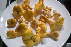 Отрежьте грибы готовые для того чтобы высушить на зима Стоковая Фотография RF