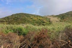 отрежьте деревья в поле стоковое фото rf