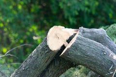 Отрежьте деревья журналов Стоковая Фотография RF