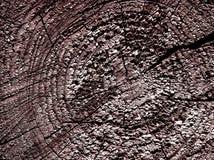 отрежьте деревянное Стоковые Изображения RF