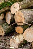 Отрежьте деревянные журналы Стоковая Фотография RF