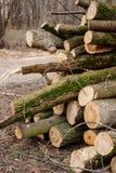 Отрежьте деревянные журналы Стоковое Фото
