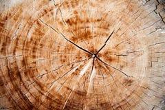 отрежьте древесину текстуры Стоковое Изображение RF