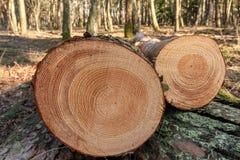Отрежьте деревья в лесе стоковое фото rf