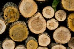 Отрежьте деревянные журналы штабелированные в куче Стоковая Фотография RF
