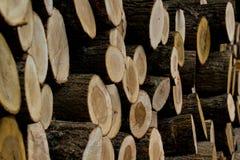 Отрежьте деревянные журналы штабелированные в куче Стоковое фото RF