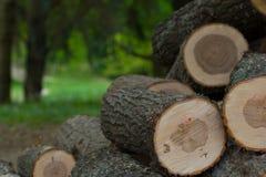 Отрежьте деревянные журналы штабелированные в куче Стоковые Фотографии RF