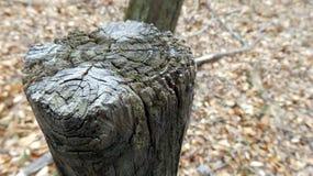 Отрежьте деревянный столб Стоковые Фото