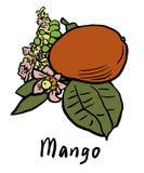 отрежьте женщину мангоа плодоовощей плодоовощ отрезанную показом Бесплатная Иллюстрация